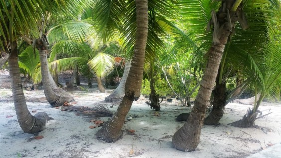 palmers in blue lagoon island bahamas