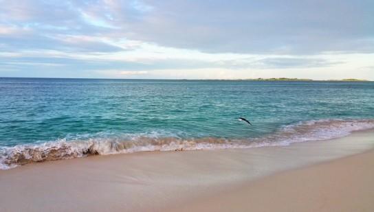 cabbage beach nassau in bahamas