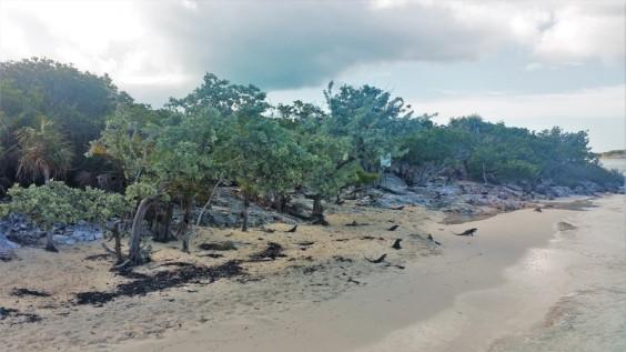 iguane island excursion exuma in bahamas