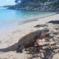 iguane island excursion nassau in exuma