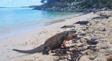 iguane island excursion nassau in exuma