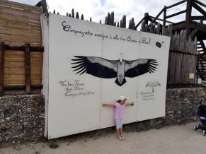 rapace taille vautour fauve