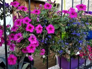 fleur au festival medieval de provins