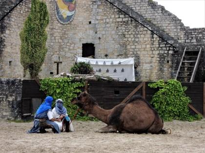 festival medieval de provins chameau