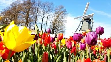 tulip parc keukenhof in lisse holland