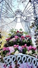 kaukenhof garden tulips (8)