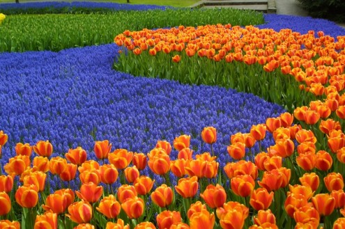 keukenhof-lisse-holland-netherlands-tulips-bike-boat-tour-fllinmei