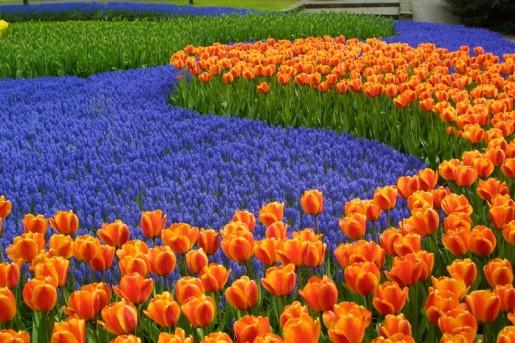 keukenhof-lisse-holland-netherlands-tulips-bike-boat-tour-fllinmei