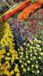 keukenhof-parc-lisse-holland-netherlands-tulips (10)