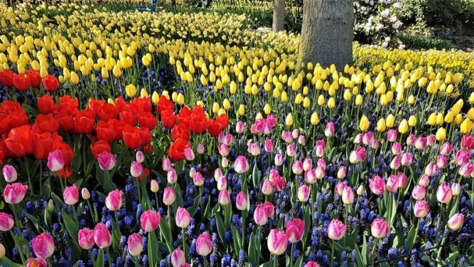 keukenhof-parc-lisse-holland-netherlands-tulips (11)