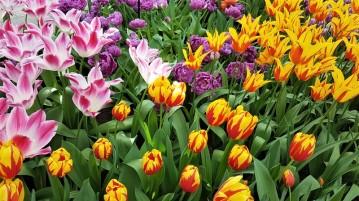 keukenhof-parc-lisse-holland-netherlands-tulips (18)