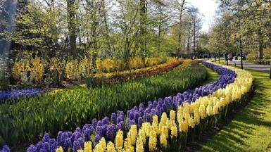 keukenhof-parc-lisse-holland-netherlands-tulips (19)