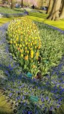 keukenhof-parc-lisse-holland-netherlands-tulips (2)