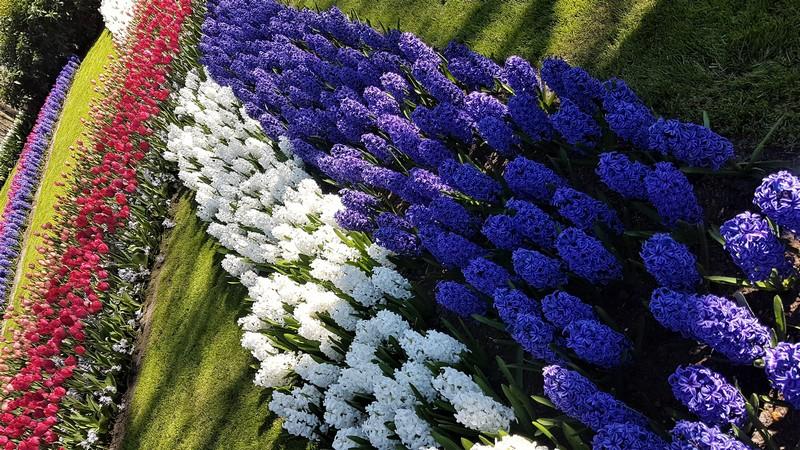 keukenhof-parc-lisse-holland-netherlands-tulips (6)