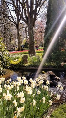 keukenhof-parc-lisse-holland-netherlands-tulips (8)