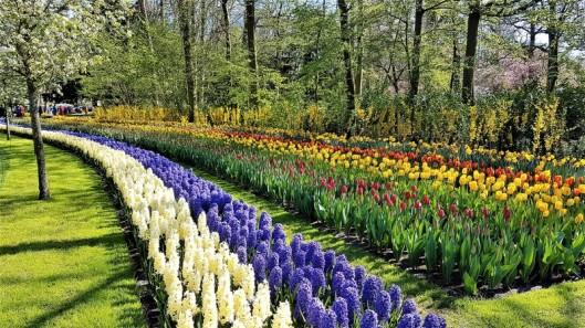keukenhof-parc-lisse-holland-netherlands-tulips