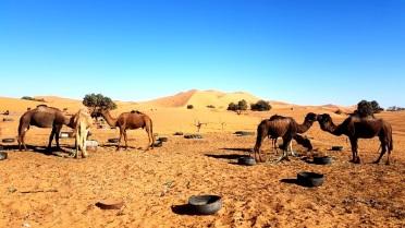 camel parking