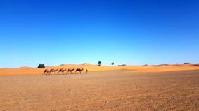 view desert sahara camel