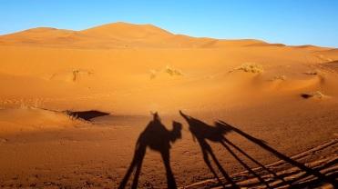 shadow camel desert