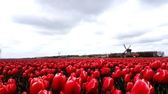 tulip parc keukenhof in lisse pays bas