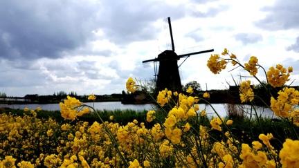 fleurs Kinderdjik Zaanse Schans