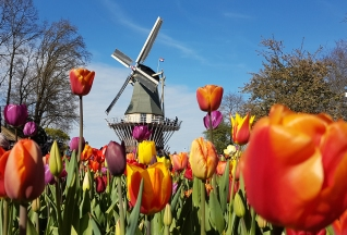moulin Parc à tulipes de Keukenhof au pays bas