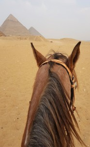 from horse pyramides gizeh cairo egypt